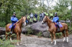 Des patrouilles pour mieux protéger les forêts des Yvelines © CD78/N.DUPREY