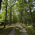Bois de Pinceloup ENS