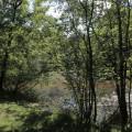 Forêt des Flambertins