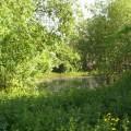 prairie alluviale - Mesnil-le-Roi