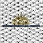 Lire au jardin grand trianon ch teau de versailles for Lire au jardin 2015 versailles