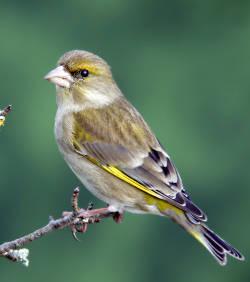 Promenade ornithologique domaine pr sidentiel marly le for Promenade dans les yvelines