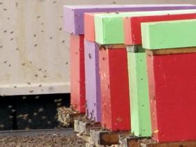 les clayes sous bois installation de 8 ruches en milieu urbain conseil d partemental des. Black Bedroom Furniture Sets. Home Design Ideas