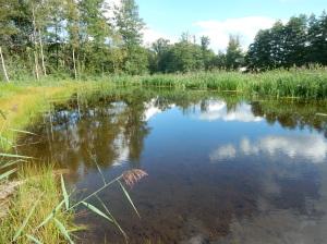 Mare abreuvoir abritant différentes libellules rares en Ile-de-France  (forêt de Ronqueux).